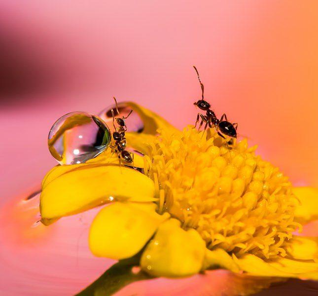 水內聚力與螞蟻